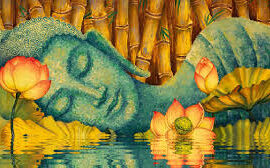 Culture of Peace and purity in soul – Lotuses